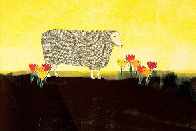Lente schaap